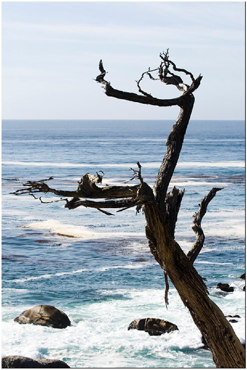 free ocean -