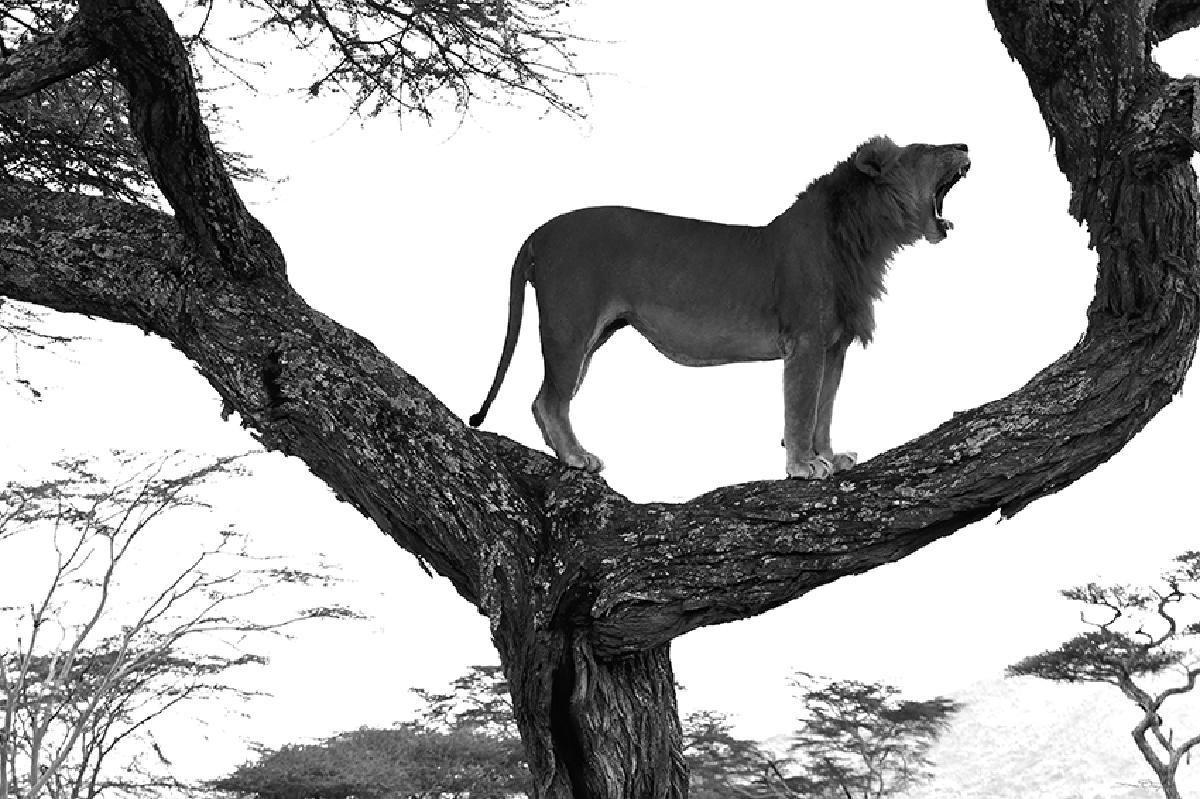 SAVANE KING -