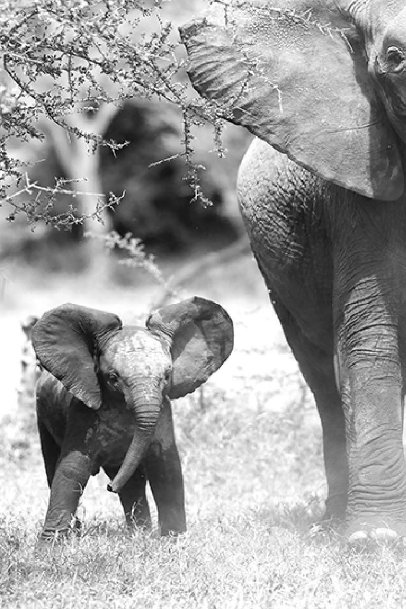 SAVANE ELEPHANT BEBE -