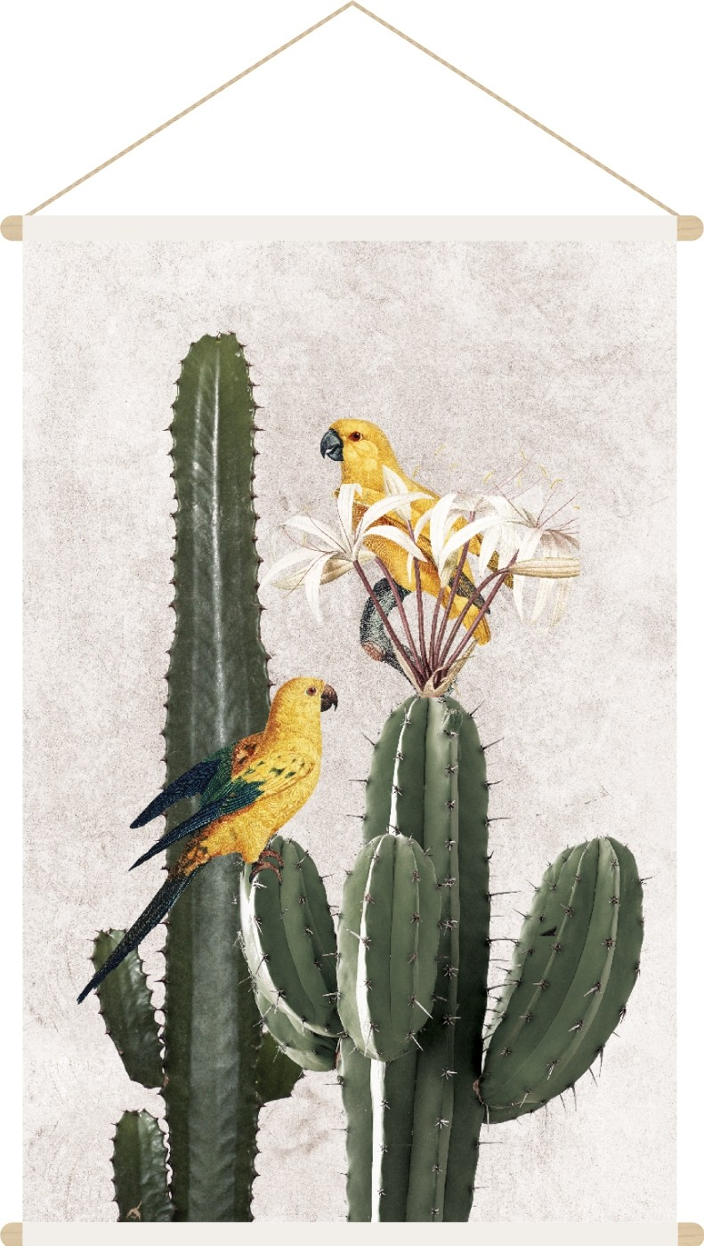 voyage cactus -