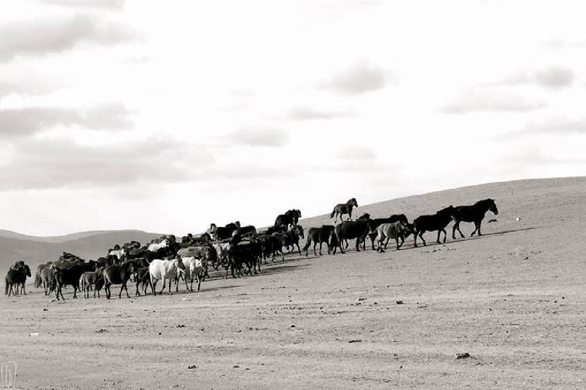 ed chevaux