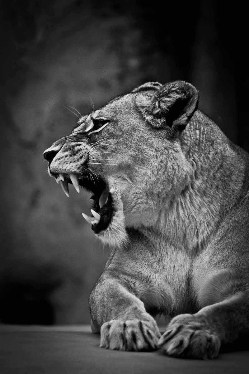 ETHNIC LIONNE