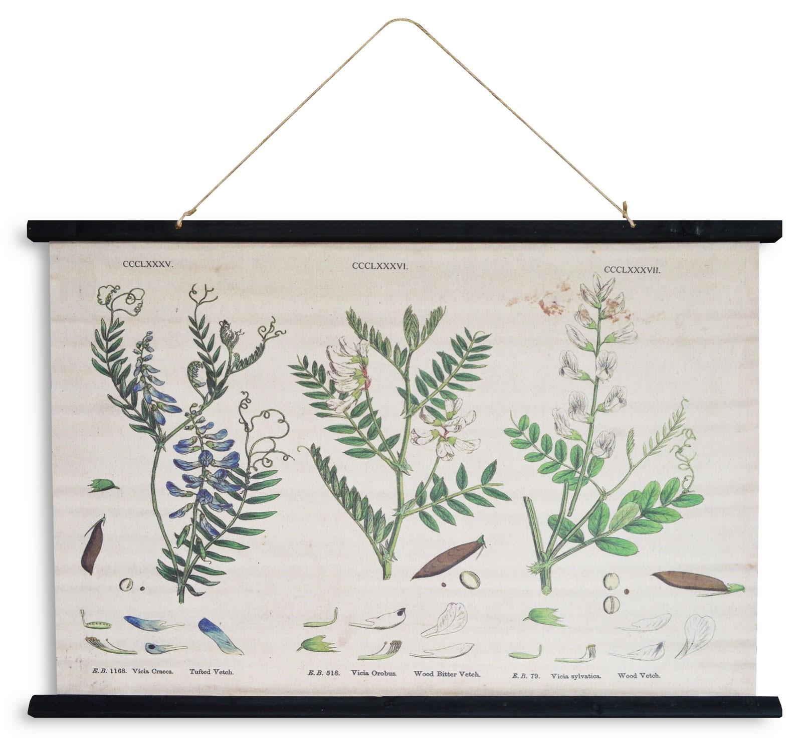 kakemono herboriste 62x94
