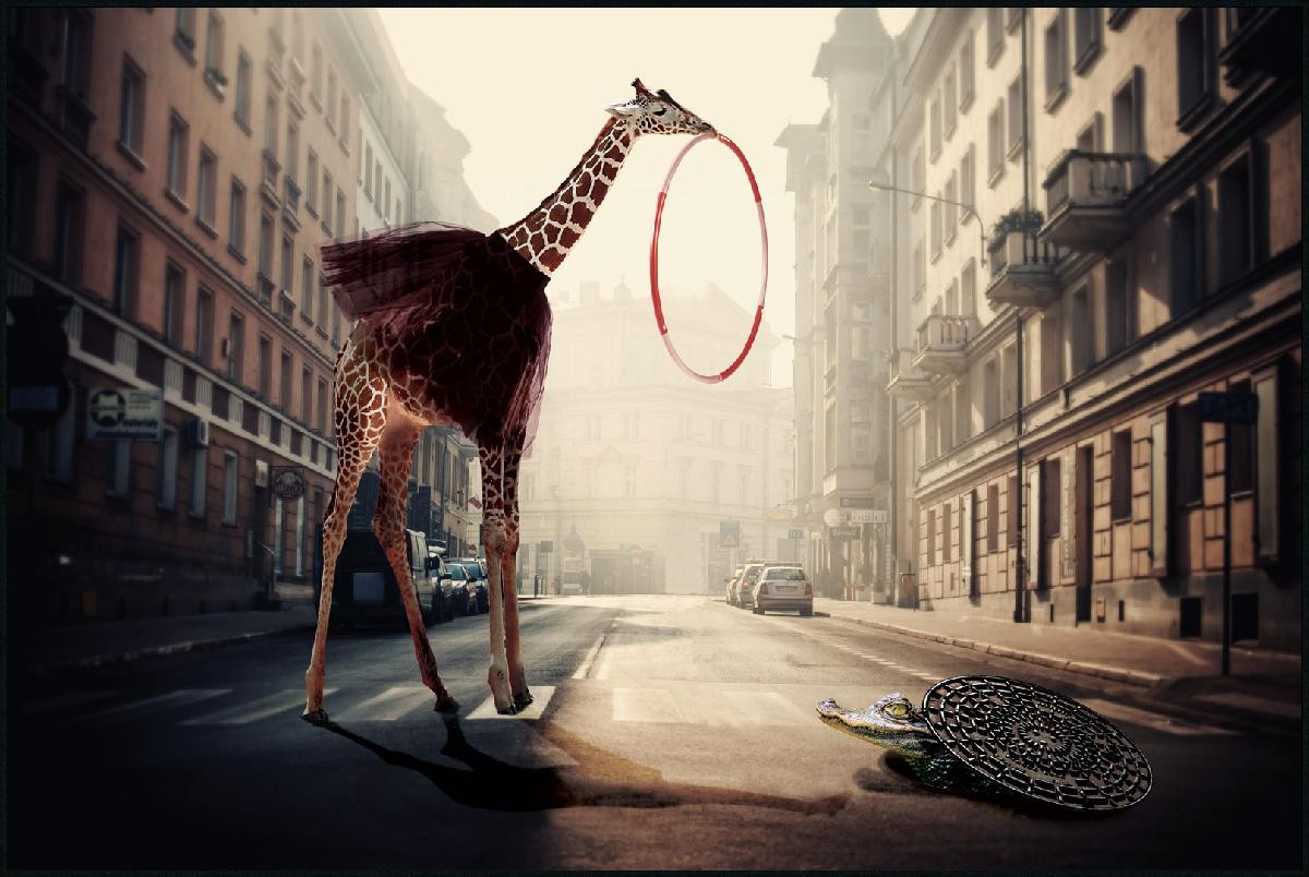girafe dans la ville